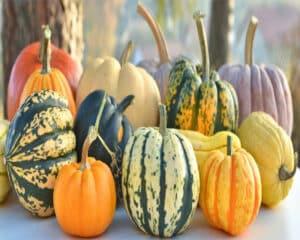 Food colors Manufacturer, Supplier in Afghanistan